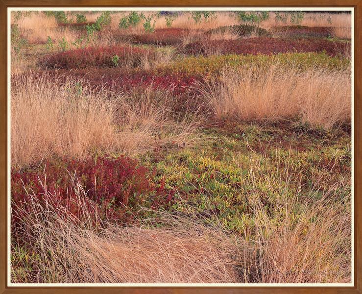 Grasses & Blueberries