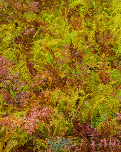 Brown and Green Ferns