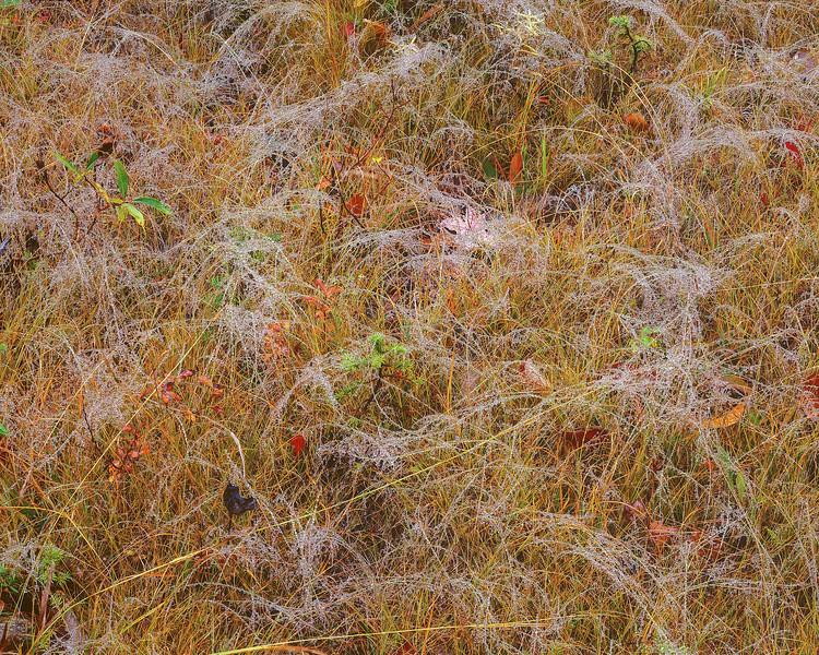 Brown Grass and Dew