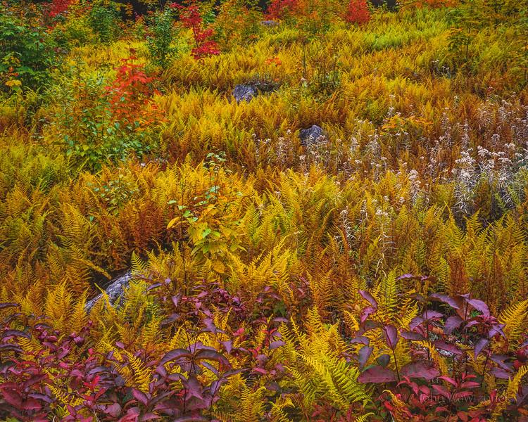 Fern Meadow I