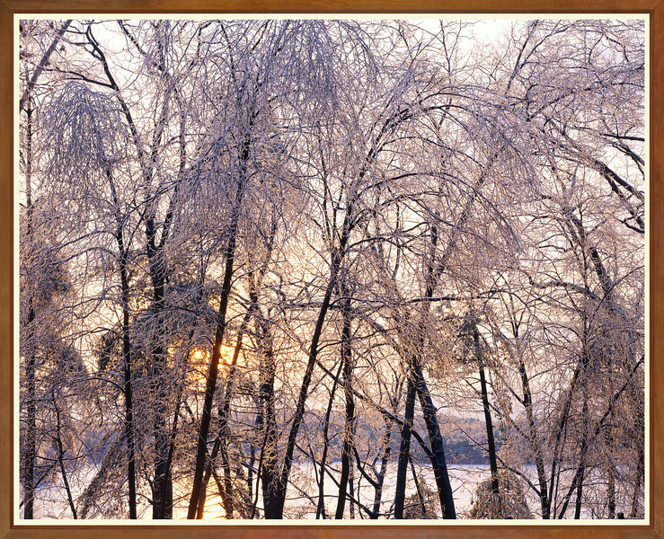 Ice Storm At Sunset, Walden Pond
