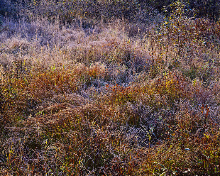 Meadow with Frost