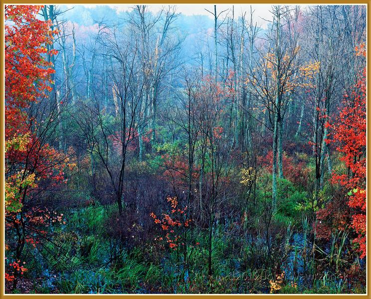 Fall Morning II