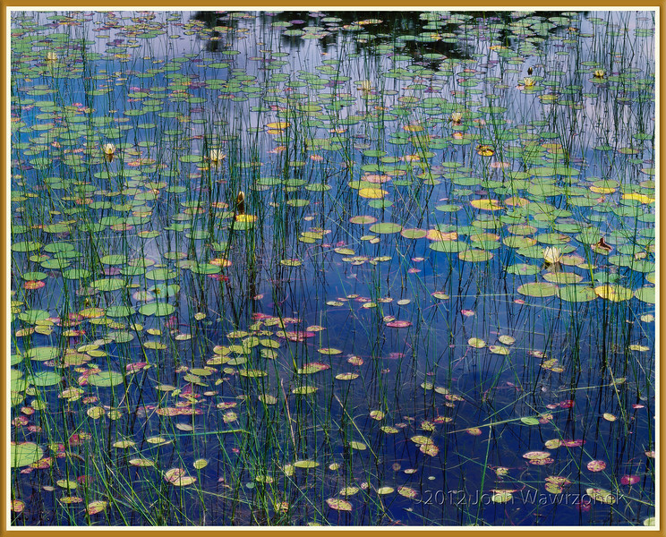 Reflection on Lily Pads