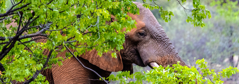 Green Season Elephant