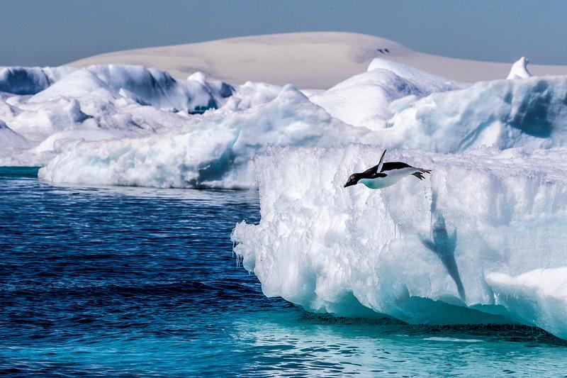 Antarctic Acrobat