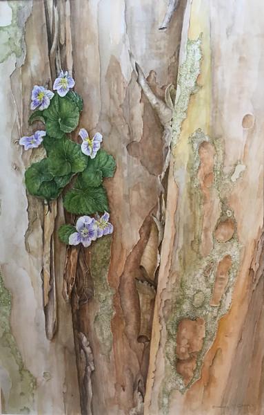 © Lee D'Zmura<br>Confederate Violet (<i>Viola sororia</i>)<br>watercolor