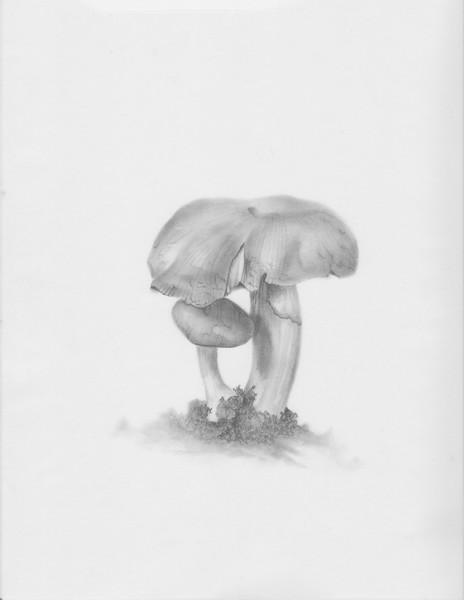 © Ann Lesciotto<br>Portobello Mushroom (<i>Agaricus bisporus</i>)<br>carbon dust