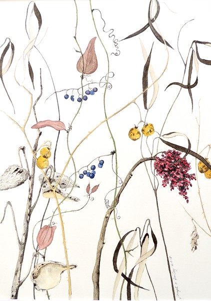 © Joseph Bailey<br>Native Virginia Meadow Plants<br>watercolor