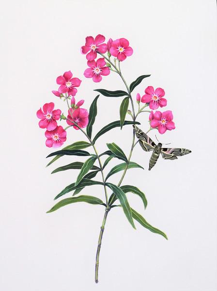 © Carol Tudor Beach<br>Oleander and Oleander Hawk Moth (<i>Nerium oleander</i> and <i>Daphnis nerii</i>)<br>acrylic