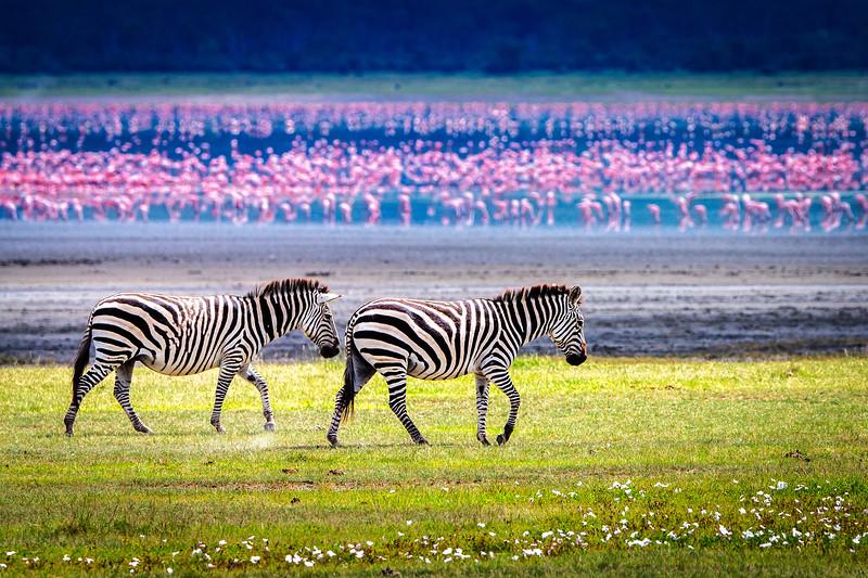 Ngorongoro Tableau