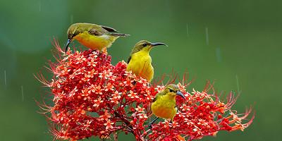 Birds as Art I