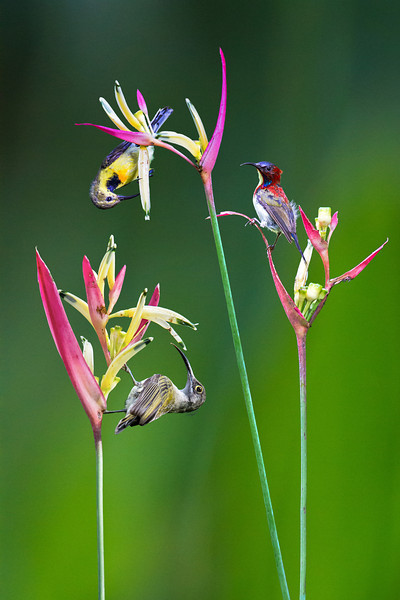 Birds of Paradise I