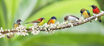 Aves Filipinas