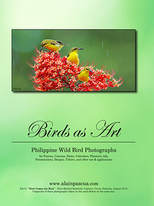 Birds as Art 2013-2014