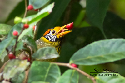 Endangered Birds of the Philippines