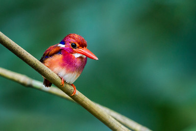 Endemic Birds of the Philippines