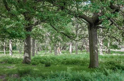 Richmond Park - London, England