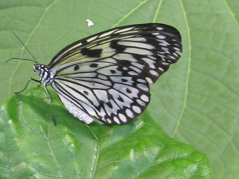 Cheryl Smith - Butterfly