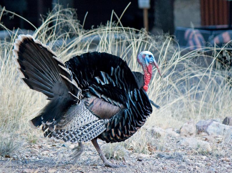Oh My Turkey!