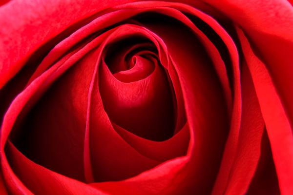 Barra_-_Rose_Bud