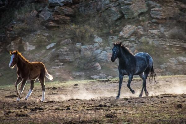 Culliton - Wild Mustang Morning Run