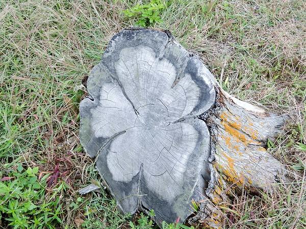 Downs - Tree Stump Artistry