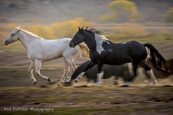 Culliton - Wild Mustang Chase