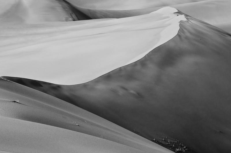 S Adams_Sand Dune Study