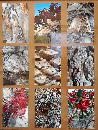 B Downs 3x3 bark montage_Boyce-Thompson-Arboretum