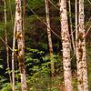 Great Bear Rainforest - British Columbia, Canada.
