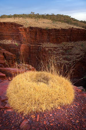 Spinifex Crown - Sunset at Oxer Lookout in Karijini National Park, Western Australia.