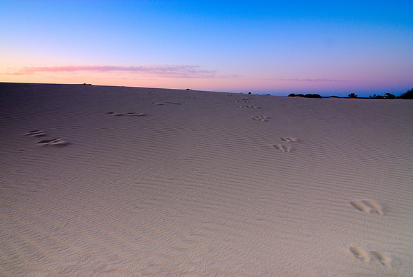 Leave Only Footprints - Sand dunes close to Vigar wells in Mungo National Park, NSW
