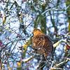 Hawthorn Winter