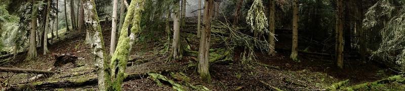 The Alder Forest : Parallel 48.789