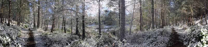 Warbler Trail : Parallel 48.800