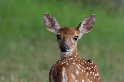 Good Morning, Sweet Fawn