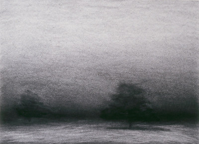 Morning Cypress, charcoal on paper image 52 x72 cm 1999