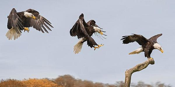 Steven Harrison - The Eagle has Landed