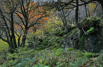 Thirlemere Glade - Terry Stoten. Commended, Prints.