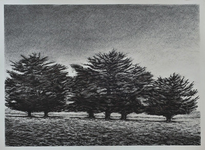 Cypress Boundary, charcoal on paper image 52x72cm framed 72 x92 cm