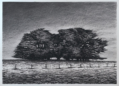 Cypress Cluster, charcoal on paper image 52 x72cm framed 72 x92 cm Available Melbourne