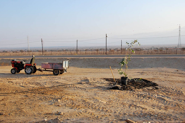 Tree Planting in Memory of Alan - Kibbutz Samar (c) Daniel Yoffee