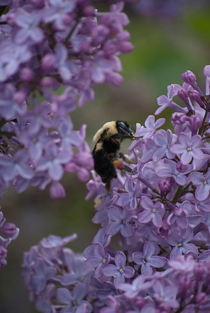 Searching for Honey (c) Daniel Yoffee