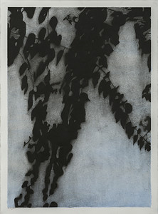 Shadow Leaves #4, charcoal & watercolor on paper, image 72 x52cm Framed 92 x72 cm $2,500 AUD (mel)