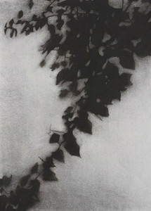 Shadow Leaves #1, charcoal on paper, image 72 x52cm Framed 92 x72cm P.O.A.(mel)