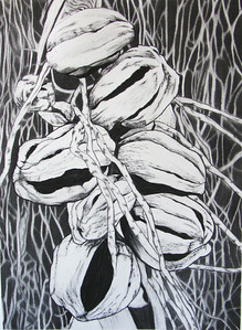 Seed Pod #2, charcoal on paper 72 x52 cm Framed 93 x73 cm (mel)