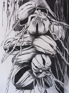 Seed Pod #1, charcoal on paper 72 x52 cm Framed 93 x73 cm  (mel)