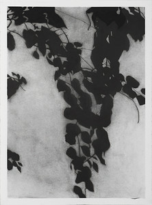 Shadow Leaves #3, charcoal on paper, image 72 x52cm Framed 92x72cm 2013 $2,500. AUD(mel)