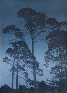 Twilight Pines, oil on paper, 71 x51 cm 2015 SOLD